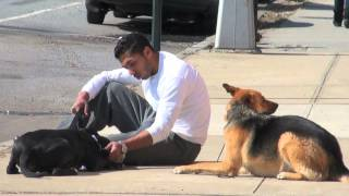 Pit Bull Terrier Aggression - Nyc Dog Training - Dctk9 - Part 5