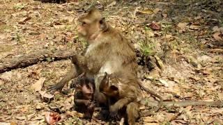 monkey gives birth