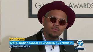 Illegal pet monkey seized from Chris Brown