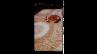 Как валерьянка действует на кота
