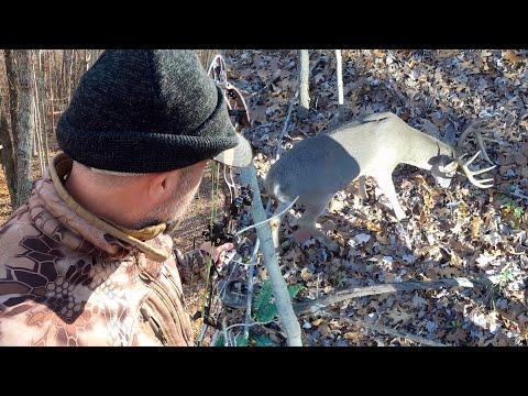 5 YARDS FROM A BIG BUCK – Archery Hunting