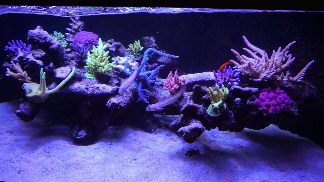 Deltabecken 500 Liter Als Floating Reef Aquascape, Reef Tank, Corals,  Meerwasseraquarium