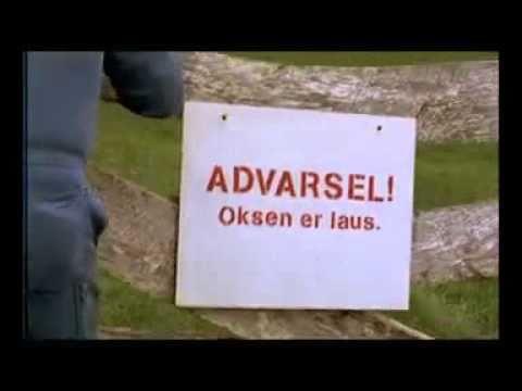 Vossafår reklame: Oksen er laus