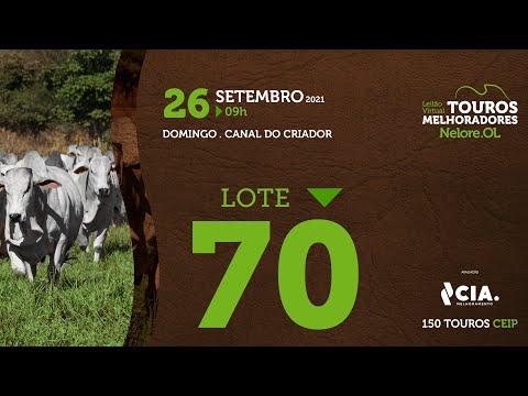 LOTE 70 - LEILÃO VIRTUAL DE TOUROS 2021 NELORE OL - CEIP