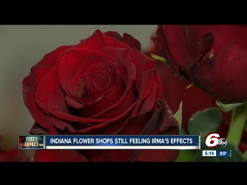 Indiana flower shops still feeling Hurricane Irma's effects