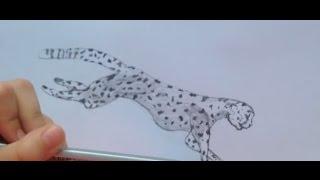 Рисую леопарда(Левша рисует леопарда, рисунок карандашом., 2016-12-22T18:18:02.000Z)