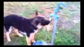 Puppy attacks water