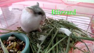 How to Mesh a Hamsters Cage