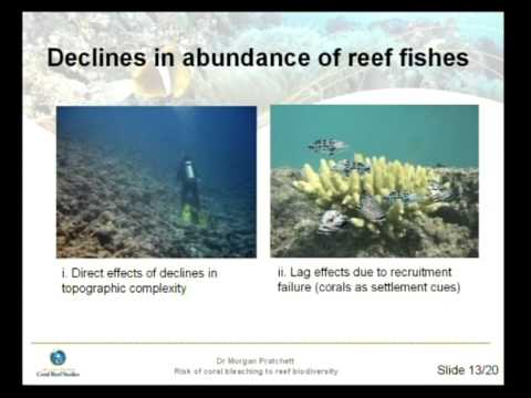 Morgan Pratchett - The risk of coral bleaching to coral reef biodiversity