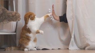 집사의-이상한-행동에-고양이들이-당황했어요