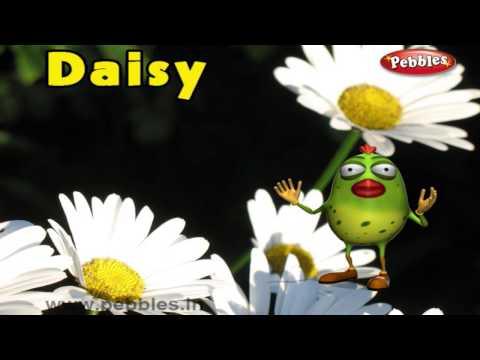 Daisy Rhyme | 3D Nursery Rhymes With Lyrics For Kids | Flower Rhymes | 3D Rhymes Animation