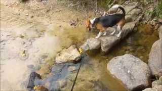 ビーグル犬、ビリーと琵琶湖の南、湖南アルプス田上山へ。 今回は鎧ダム...