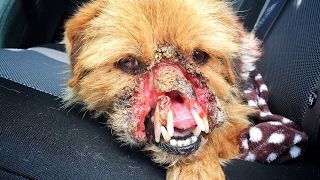 DOG FOUND MISSING HALF HIS FACE!  NEVER SEEN ANYTHING LIKE IT! JOIN ME ON THIS RESCUE!