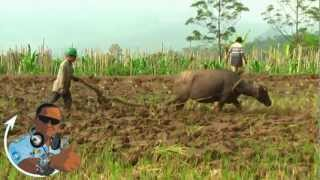 Wet Rice Field With My Carabao - Kuningan 2011 (Degung)
