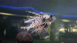 Рыбки . аквариум. Морские рыбы.