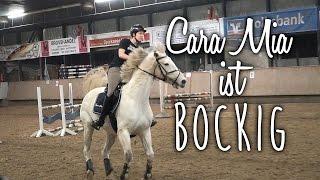 CARA MIA IST BOCKIG! - Springtraining und was die Osteopathin dazu sagt..