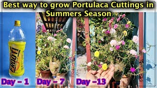 Best way to grow Multiple colours of Portulaca Cuttings, in plastic bottles this Summers l Moss Rose