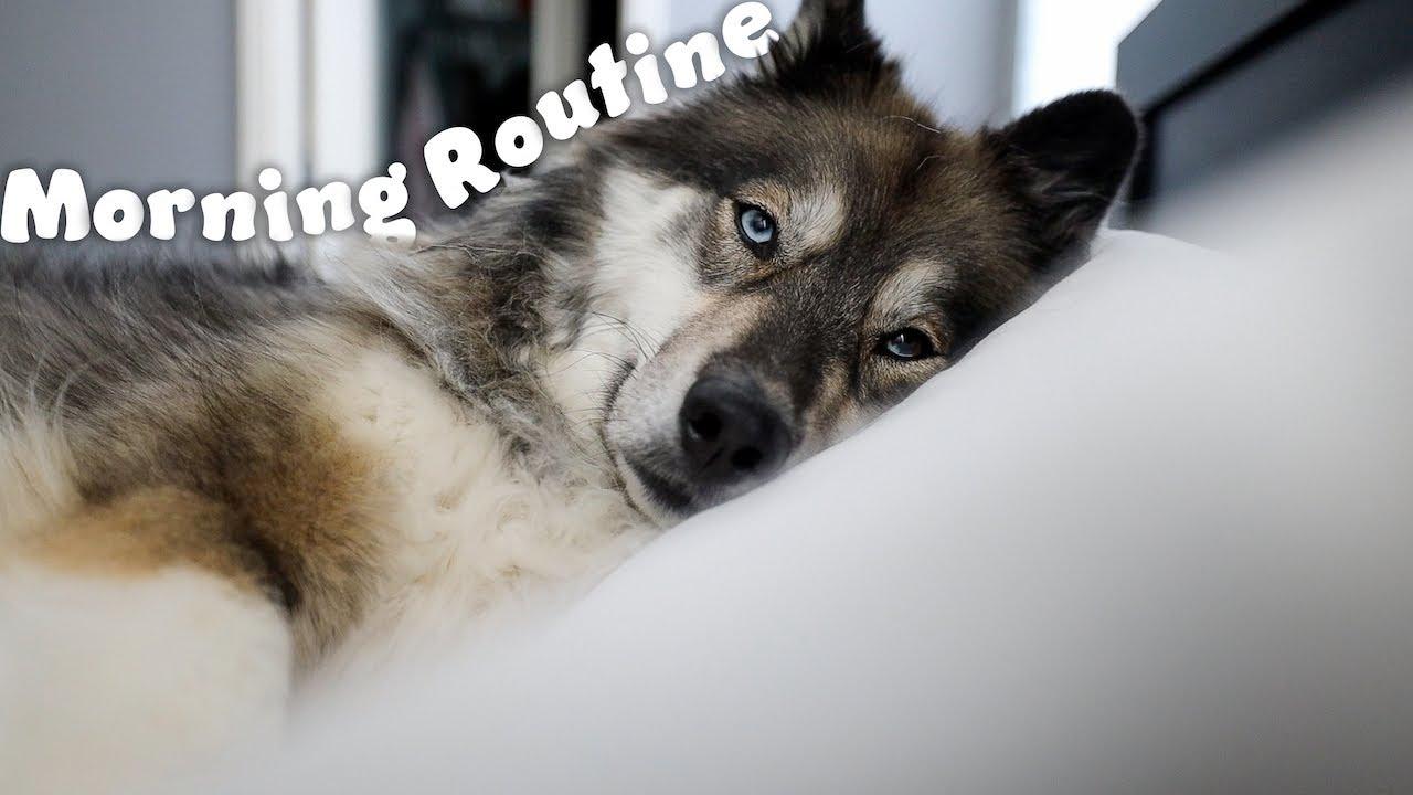 My Huskies Morning Routine!
