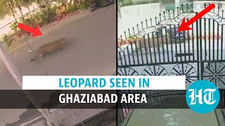 Watch: Leopard enters residential area in Ghaziabad; rescued later