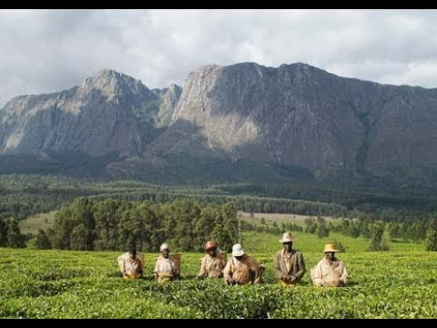Mount mulanje a beautiful sight