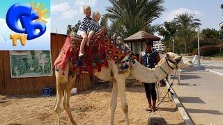 Даня в Египте День#3 катаемся на верблюде кормим его Daniil ride a camel in Egypt