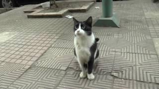 Nicoleさん Nagwaさんのエジプトの朝の散歩シーンで出会ったにゃんこ(...