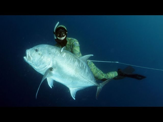 Pesca Sub em Moçambique / Spearfishing Mozambique Travel Video