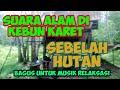 Suara Alam Di Kebun Karet Sebelah Hutan Cocok Untuk Musik Relaksasi  Mp3 - Mp4 Download