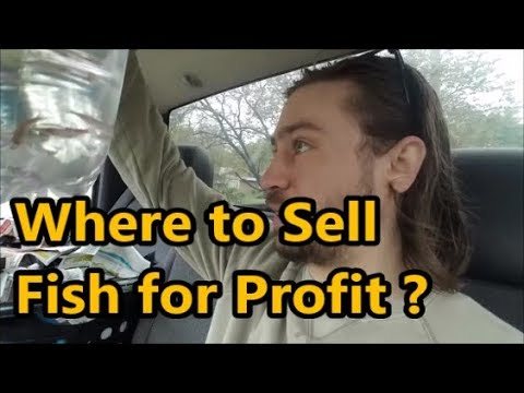 Fish For Profit / Selling Fish Locally / Fish Club Meetup