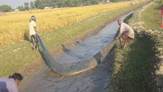 Fishing In Village Canal   Traditional Fish Catching