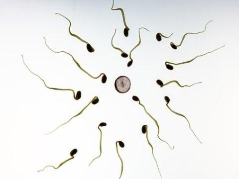 Ternyata ini penyebab sel telur gagal dibuahi