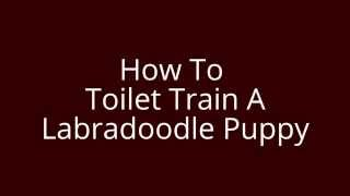 How To Toilet Train A Labradoodle Puppy | Free Mini Course