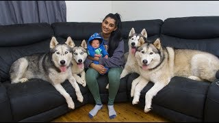 OUR 4 SIBERIAN HUSKIES MEETING THEIR NEWBORN BABY BROTHER KALEB FOR THE FIRST TIME!