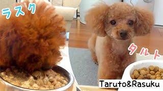 生後86日目のRasuくんと、7歳8ヶ月のTaruちゃんです   とっても久しぶり...