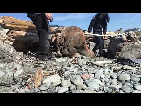 DIY driftwood shelter on the beach
