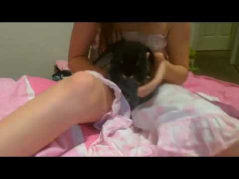 How to pick up a bunny rabbit! also good for kicking bunnys! - YouTube
