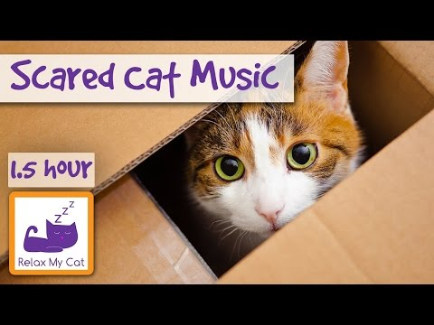 Soothing Music for Scared Cats – Music to Help Your Cat Relax! Soothing Music for Cats