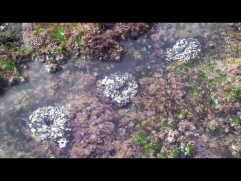 THE TIDE POOL SONG- with hand dances- by Birdsong and the Eco-Wonders
