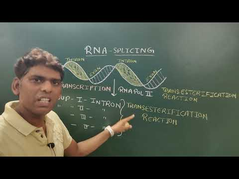 RNA- Splicing (Group-I And II Introns)