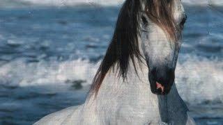 cheval Franche-Comté France - 01bots #animaux