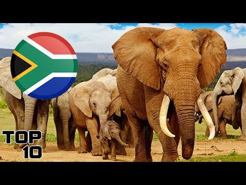Top 10 South Africa Surprising Facts