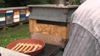 Horváth Róbert méhész Thumbnail