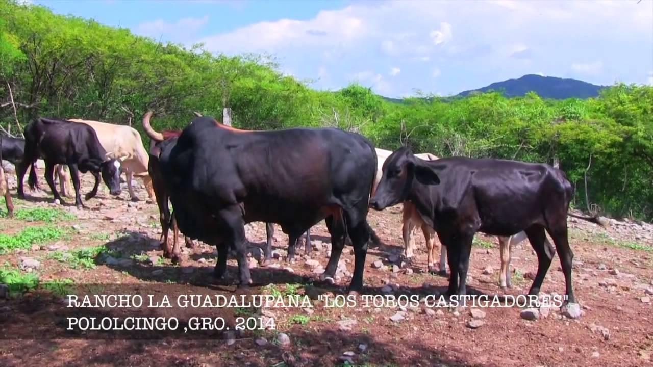 LA CASA DE LOS CASTIGADORES R LA GUADALUPANA DE