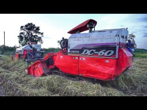 รถเกี่ยว คูโบต้า Kubota DC60 สองคันลุยเกี่ยวข้าวนาหล่ม harvester