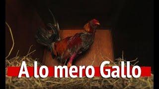 A lo mero gallo
