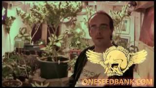 Seedism Killa-Watt