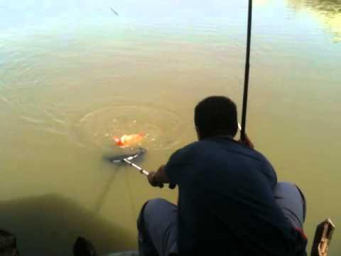 Hoàng Anh câu cá chép đỏ