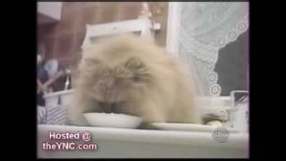 Форсаж 5   cat original