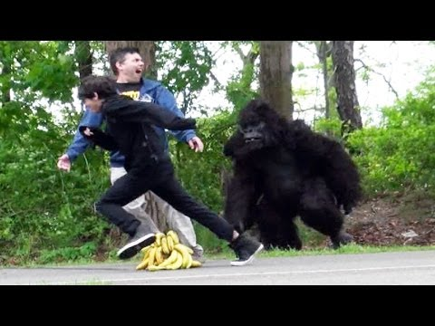 Classic Gorilla In Real Life Hidden Camera Prank