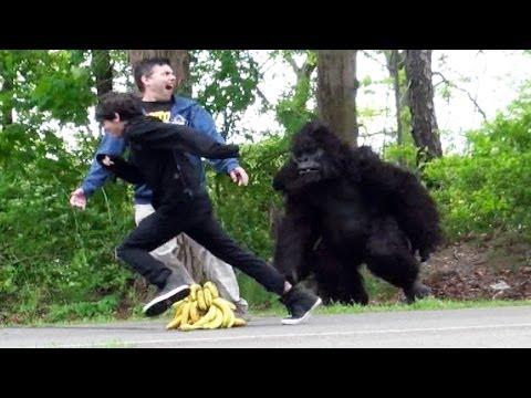 В сша горилла выбежала на стадион протестовать против расизма видео